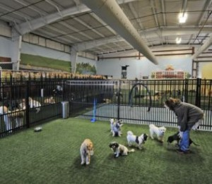 Boston Herald on indoor dog parks